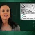 Autologous osteoblast injection hastens fracture healing