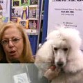 Meet the Breeds: The Standard Poodle