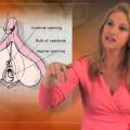Vaginal vs. Clitoral Orgasm
