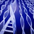 Supreme Court Hears Debate Over Human Gene Patents