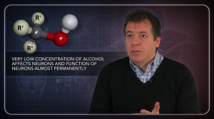 How Alcohol Permanently Affects the Genes of Neurons