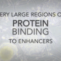 Super-Enhancers May Pave the Way for Future Cancer Therapies