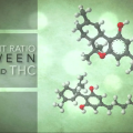 Finding the Right Ratio for Medical Marijuana
