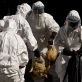 Deadly H5N1 Bird Flu Needs Just 5 Mutations to Become Airborne