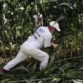 Study Fuels GMO Controversy