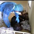 WHO Names Ebola International Health Risk