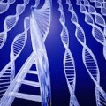 Researchers Discover Gene Mutations Thought to Cause a Common Heart Condition