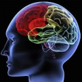 Brain Scans May Change the Way Doctors Determine Treatment