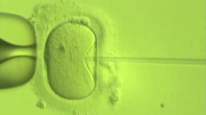 Increased Number of IVF Cycles May Be Beneficial