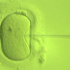 12.22.2015 - JAMA Report - New Research Suggests Increased Number of IVF Cycles Can Be Beneficial 2