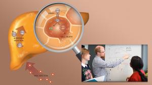 Interferon Downregulates Superoxide Dismutase Enzyme in Liver