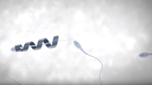 Male Infertility Might be Cured with Help from the Spermbot