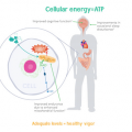 Dietary Supplement Can Help Maintain NAD+ Levels in Aging Patients
