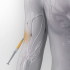 Optimizing the Immune System to Identify and Eradicate Cancer