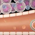 Microscopic Biohybrid Robots Attack Brain Tumors in Mice
